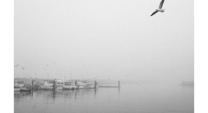 Serie Niebla